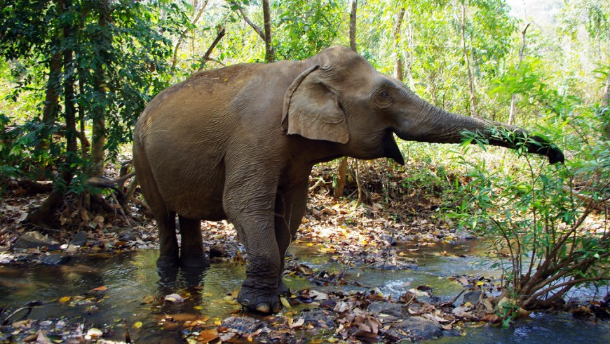 One of Elephant Valley Project's elephants