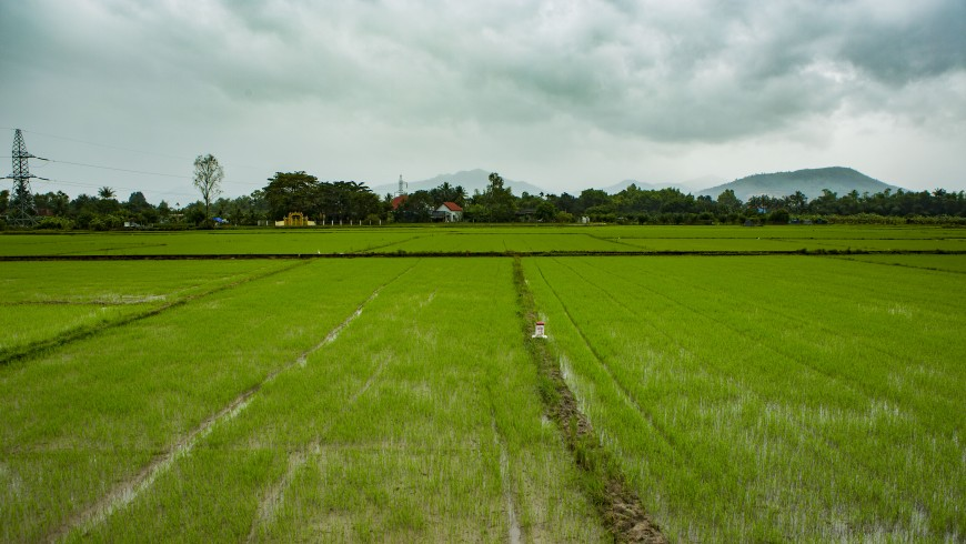 Rice fields, Vietnam
