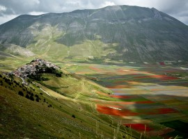 After the earthquake the flowering of Castelluccio di Norcia is back