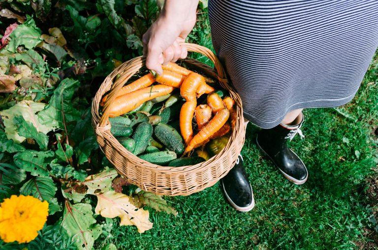 Organic vegetables, Eco Prague- sustainable shopping