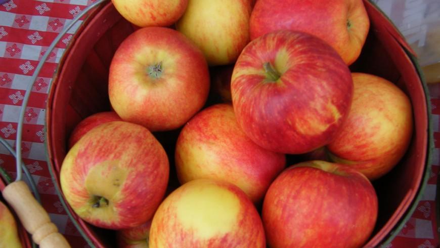 Organic food apples