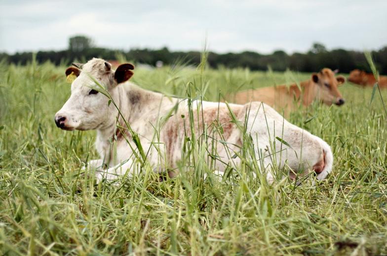 Organic food- organic farming