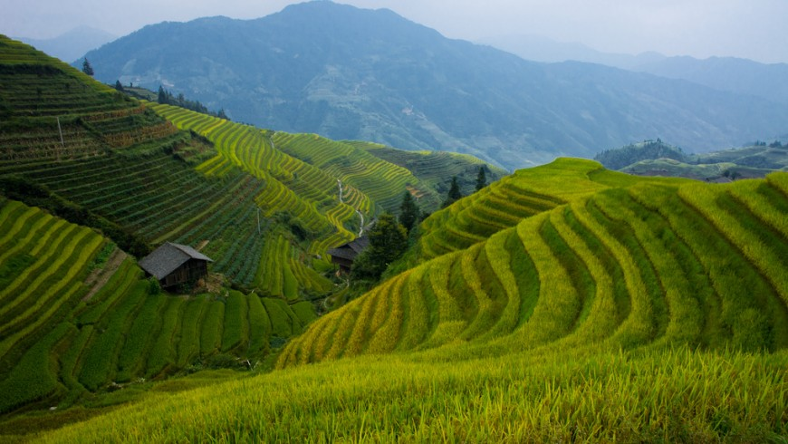 Photography South China rice fields