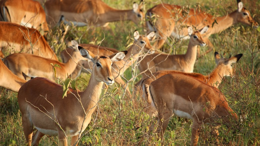 Ecotourism: a resource for the conservation of wildlife