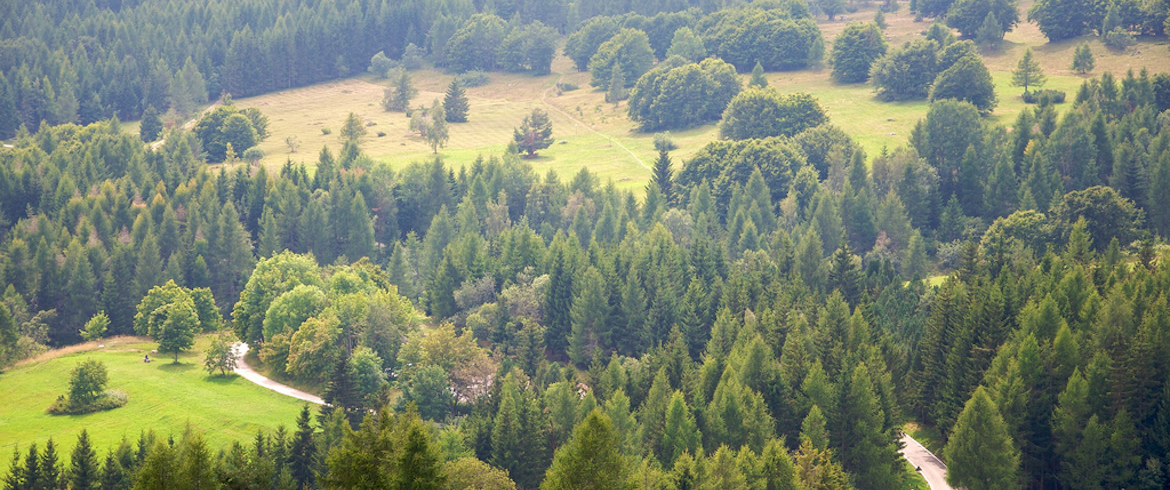 The wonders of the woods in Trentino
