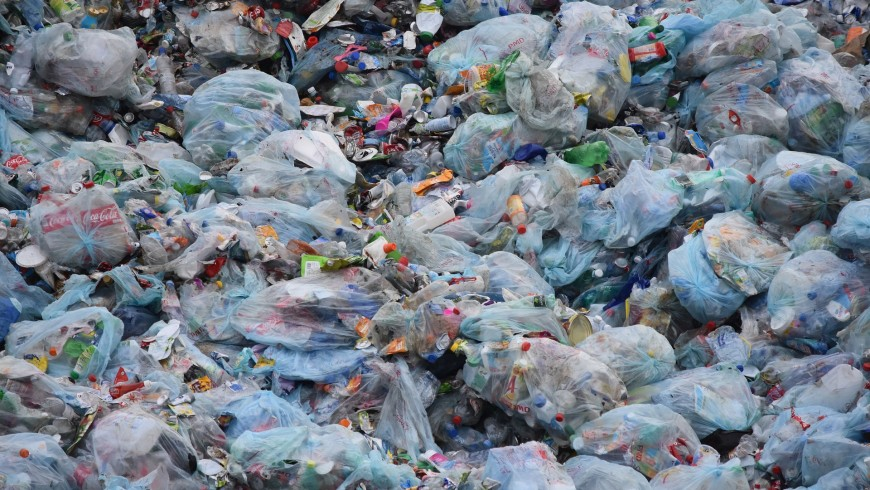 Fungus can feed on plastic