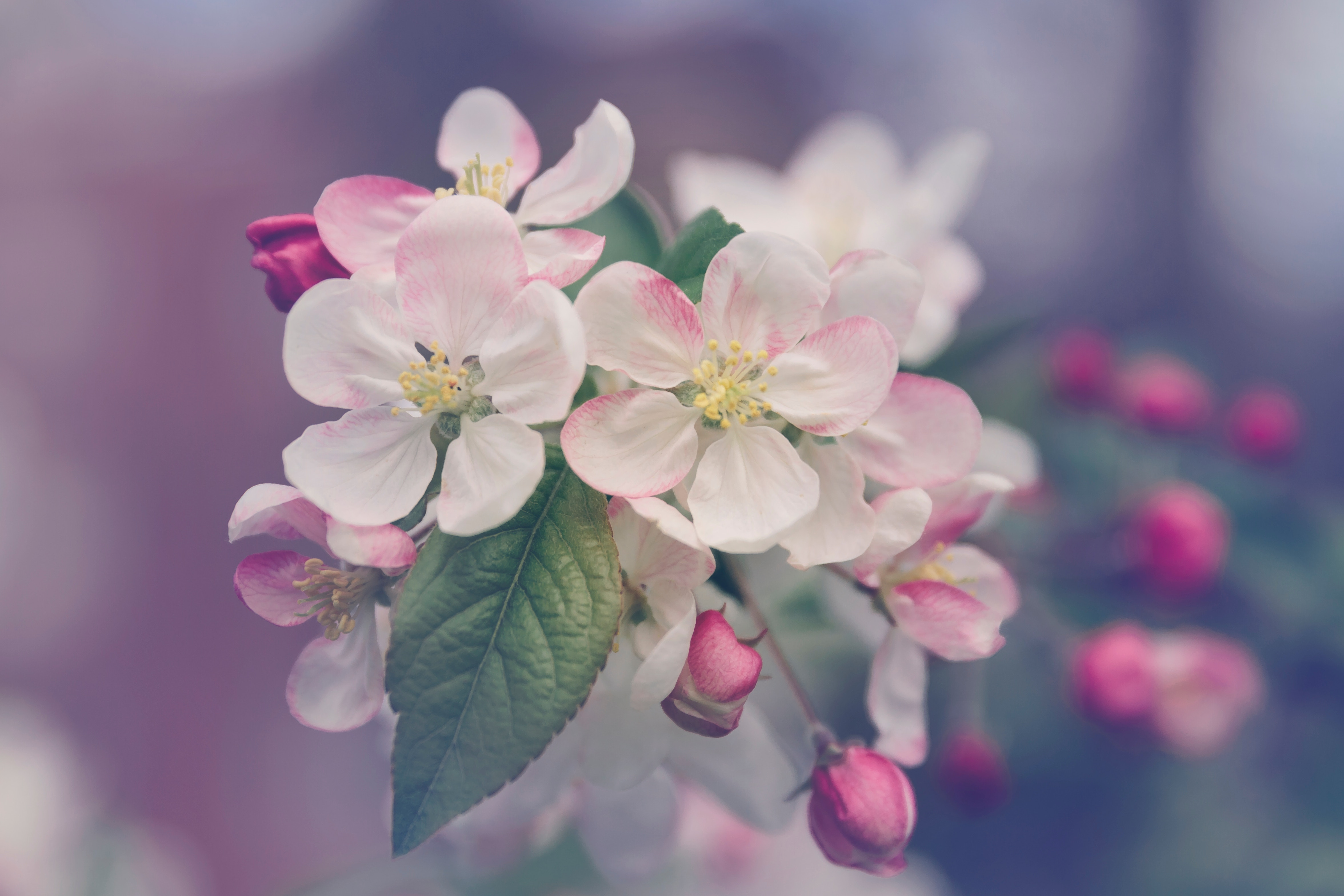 The Beauty of Flowers, photo by Marivi Pazos via Unsplash