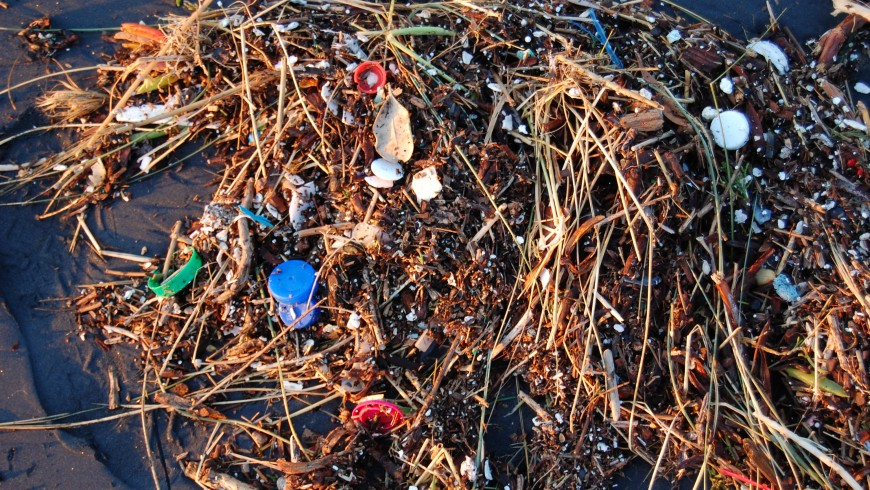 Plastic Ocean, photo by Wikimedia Commons