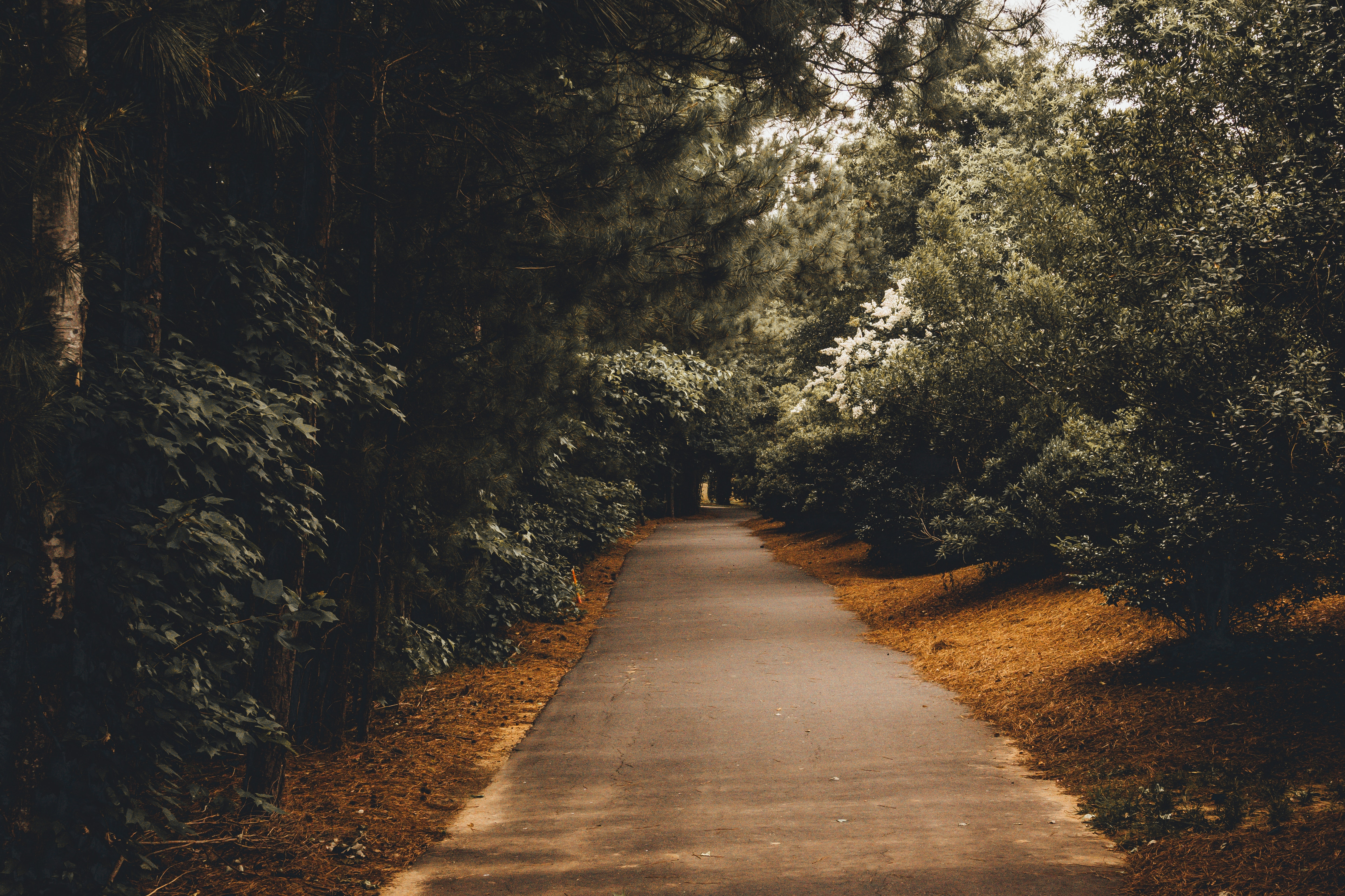 A path passing through some trees, photo by Gui Avelar via Unsplash