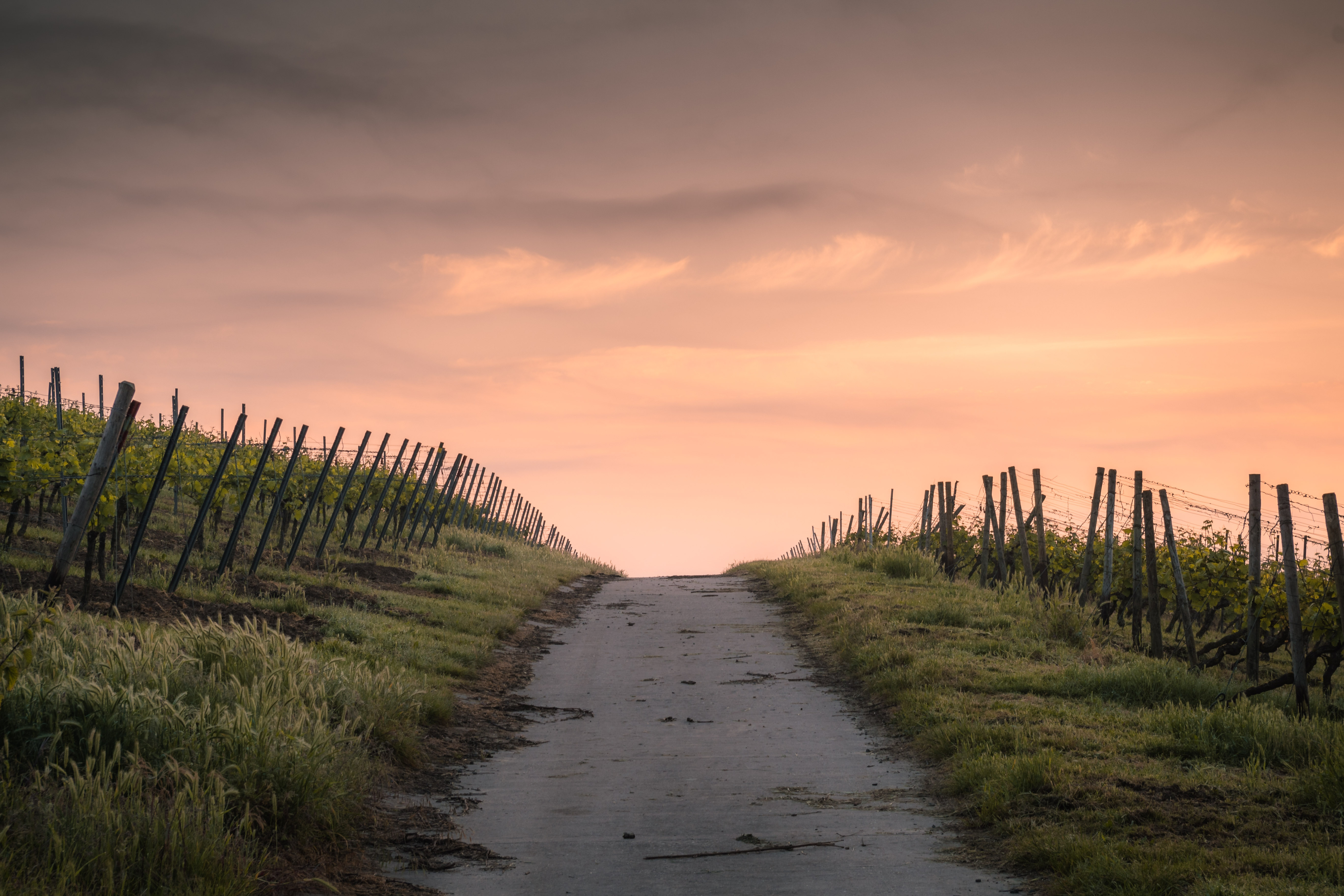 Sunset on path, photo by Karsten Wurth via Unsplash