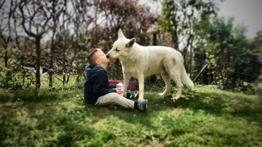 kiss dog