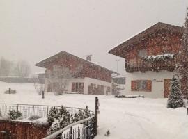 Snowing on Pineta, winter holidays