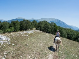 Horse riding on a mountain, Castel D'Aiano, photo via pixabay