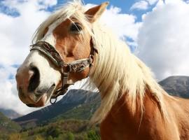 Horse on a mountain, photo via pixabay