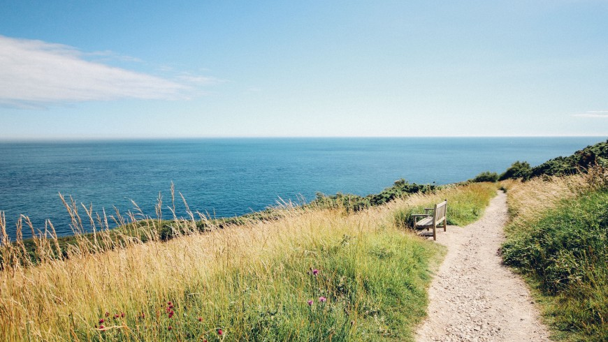 Green path above the sea, photo by Rachel Lees via Unsplash
