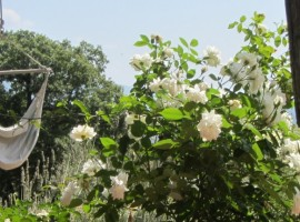 Agriturismo Poggio Pratelli's garden, green accommodations