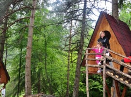 Tree Sleeping in the Friulan Dolomites