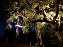Tree sleeping in Pineta Baratti (Tuscany)