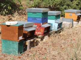 Bees - Mater, a zero impact project in Apulia