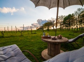 Organic farm in Tuscany for a wellness getaway