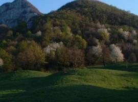Walk in the vivid green mountains around the Malga