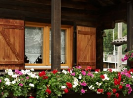 A chalet among the roses of Dolomites
