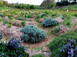 Il Querceto, an agritourism company committed to safeguarding biodiversity