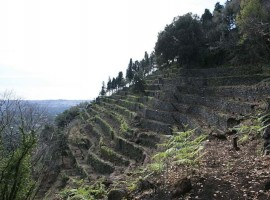 24 hectares of biodiversity on the slopes of Etna