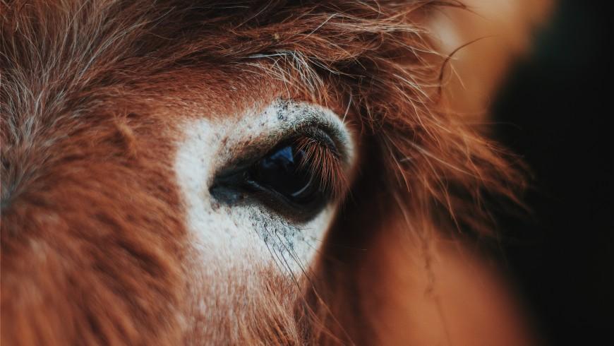 Donkey, Family Holidays in Trentino, Italy