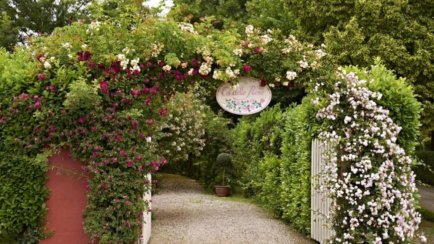 A rose garden near Venice