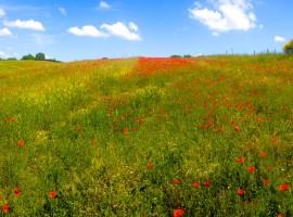 Tuscan Maremma: Landscape near Sant'Egle