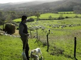 A holiday on a farm in Maremma
