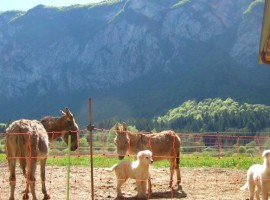 A farm holiday at the foot of the Adamello Brenta Nature Park