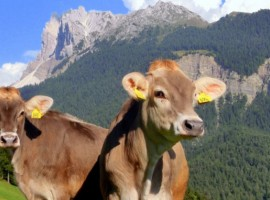 Felthunerhof Maso, your eco-friendly holiday in Val di Funes