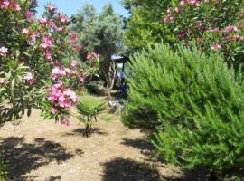 Eco-friendly B&B in Silba, Croatia