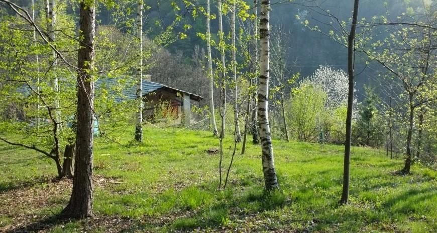 Vegan and vegetarian breakfasts in the woods of Piedmont