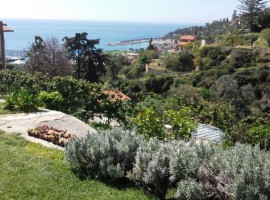 The garden overlooking the sea - Agrilunassa, in Bordighera hills, Liguria (Italy)