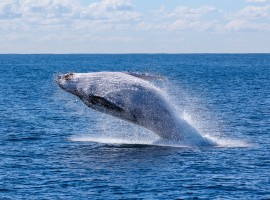 whale watching, near the eco-glamping in Tarife, Spain