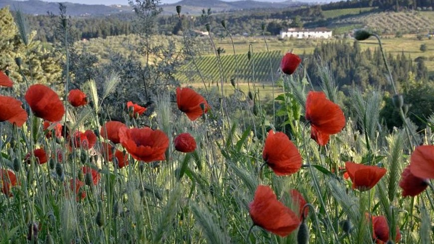 Biodiversity, unspoilt nature and a lively and rich vegetation near Ancora del Chianti