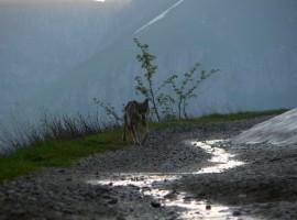 Spot wild animals in Limone Piemonte