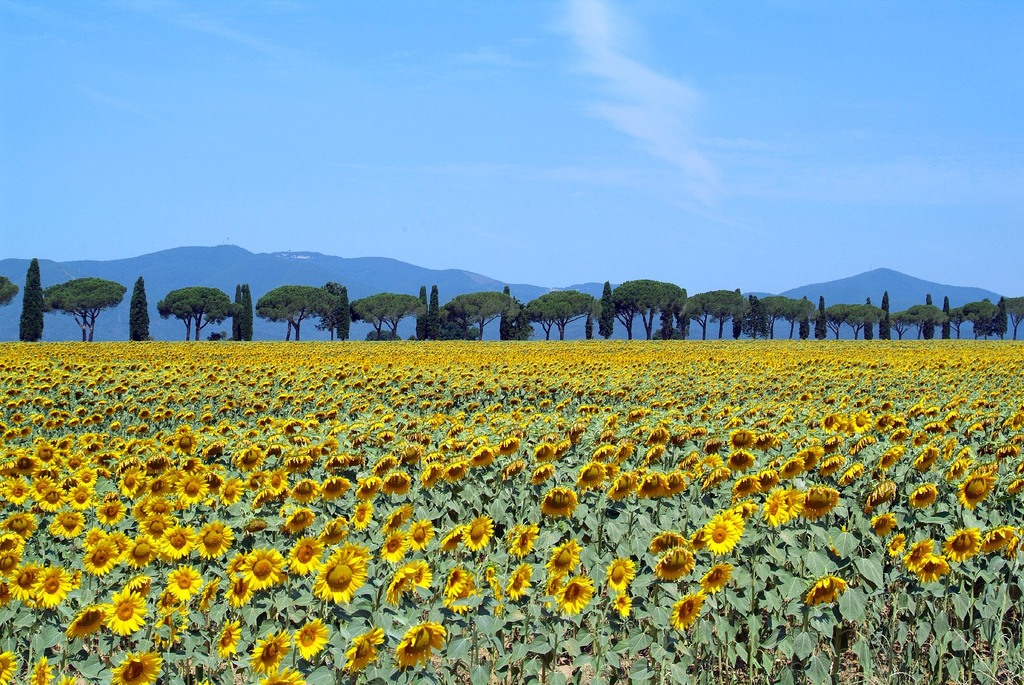 Tuscan Maremma
