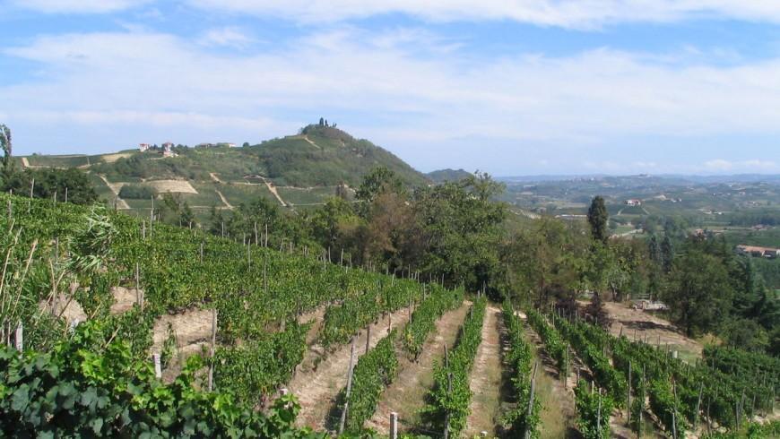 Foliage in Piedmont