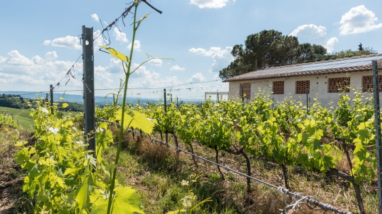 Eco-friendly accommodation among Chianti vineyards