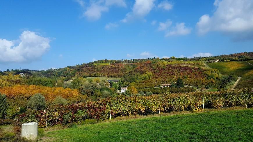 Among the hills of Monferrato
