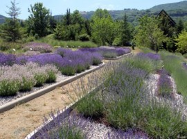 Your room among the lavender fields