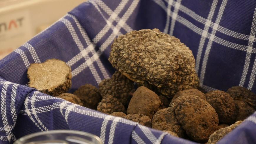 Montespertoli truffle