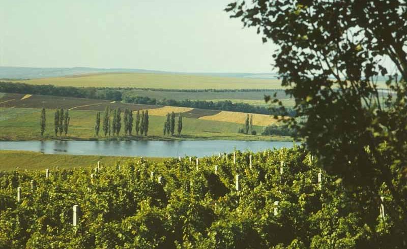 Moldova Chisinau, local vineyards
