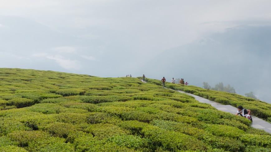Sikkim, green landscape