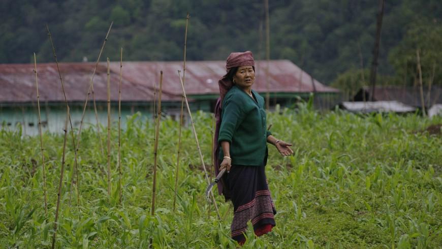 Sikkim, farmer