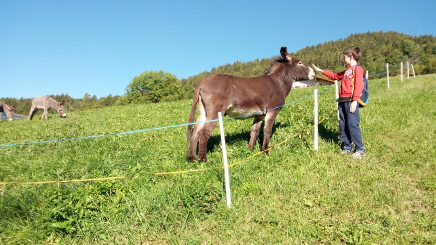 Val di Funes, Meeting ta donkey